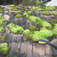 Before Moss is Removed